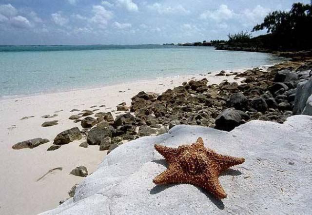Багамские острова C6AQQ N3IQ