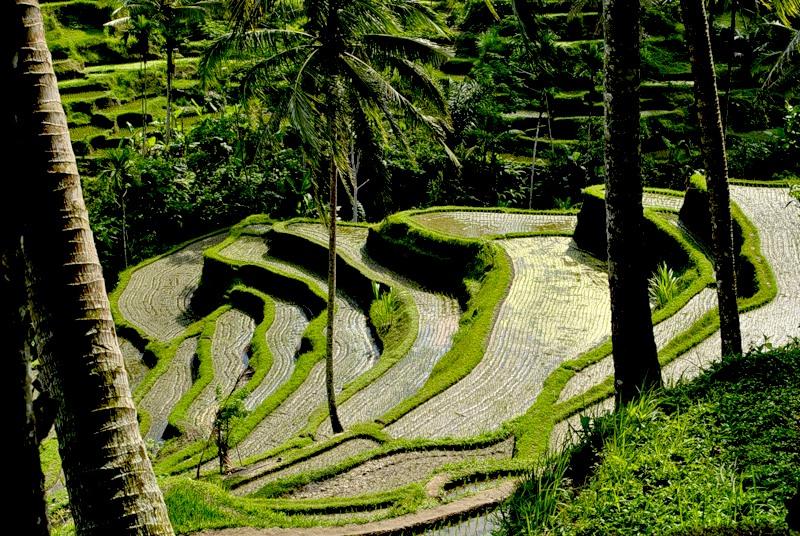 Bali Island YB9/DJ7XJ