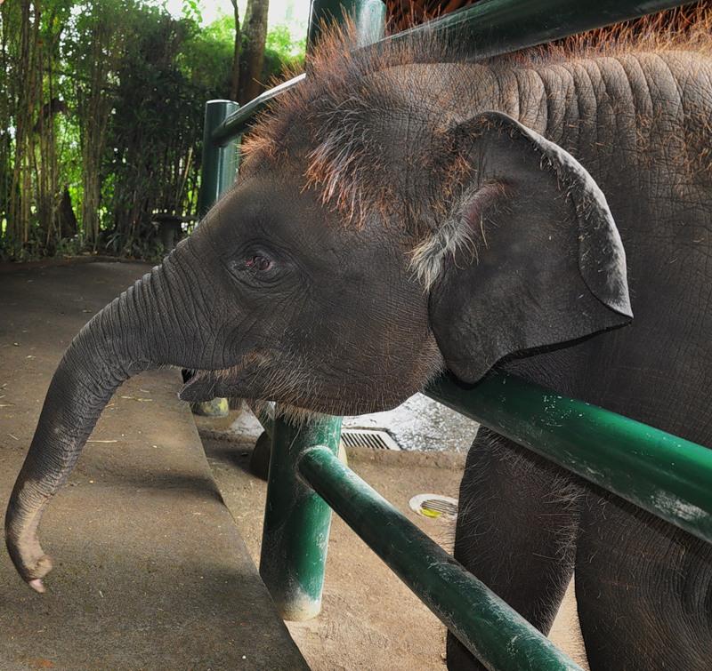 Bali Island YB9/GM3OOK YB9/G4JVG Elephant