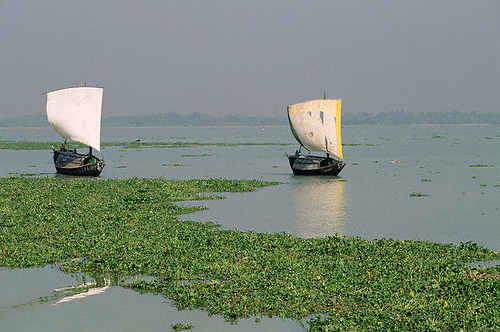 Bangladesh S21FGC
