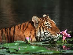 Bangladesh S21YX