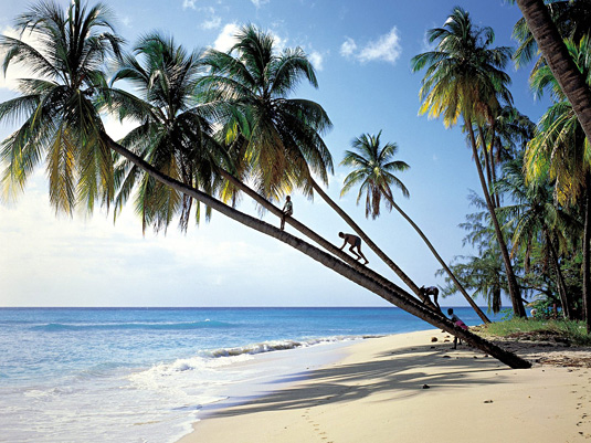 Barbados Island DX News