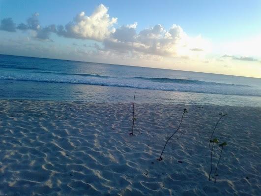 Барбадос 8P9BN