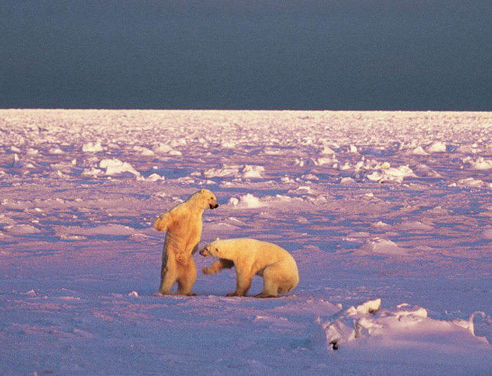 Остров Медвежий JW2US