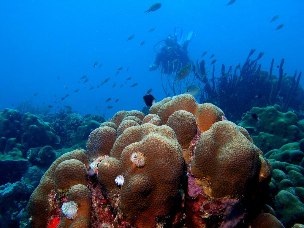 Belize V31MH V31TS Coral Reef