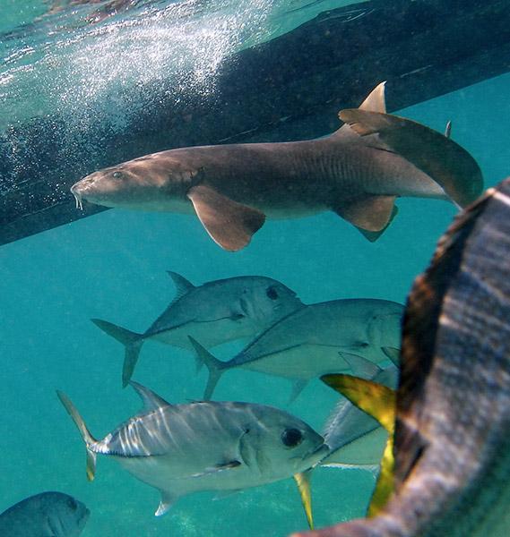 Belize V31NO DX News
