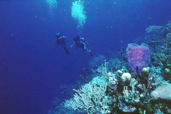 Belize V31SB Barrier Reef DX News