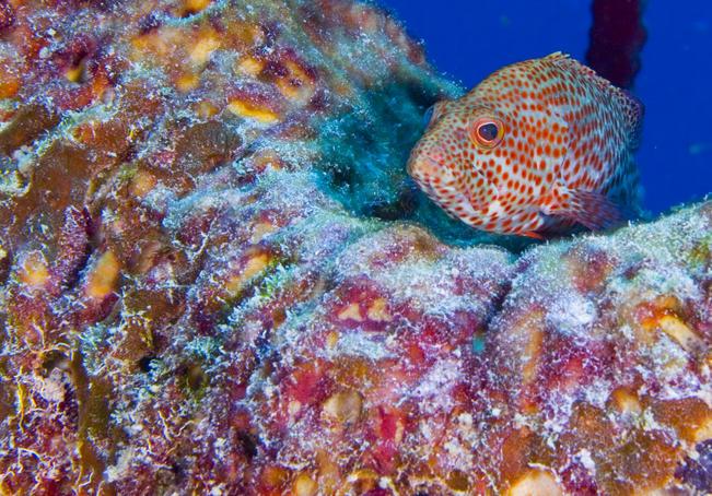 Белиз V31YI Коралловые Рифы