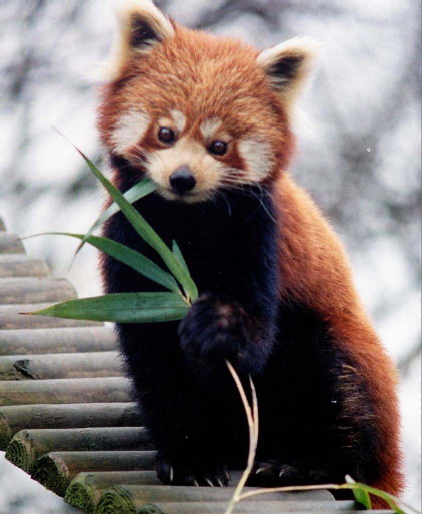 Bhutan A52EQW A52IVO A52AEF DX News Panda