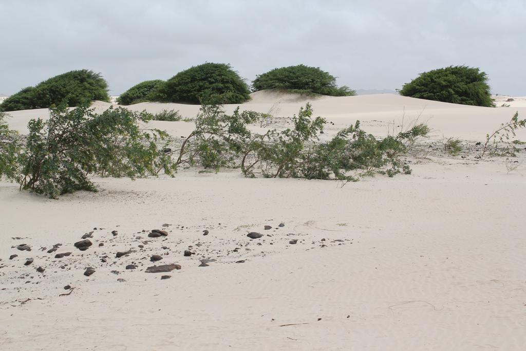 Boa Vista Island D44TWQ