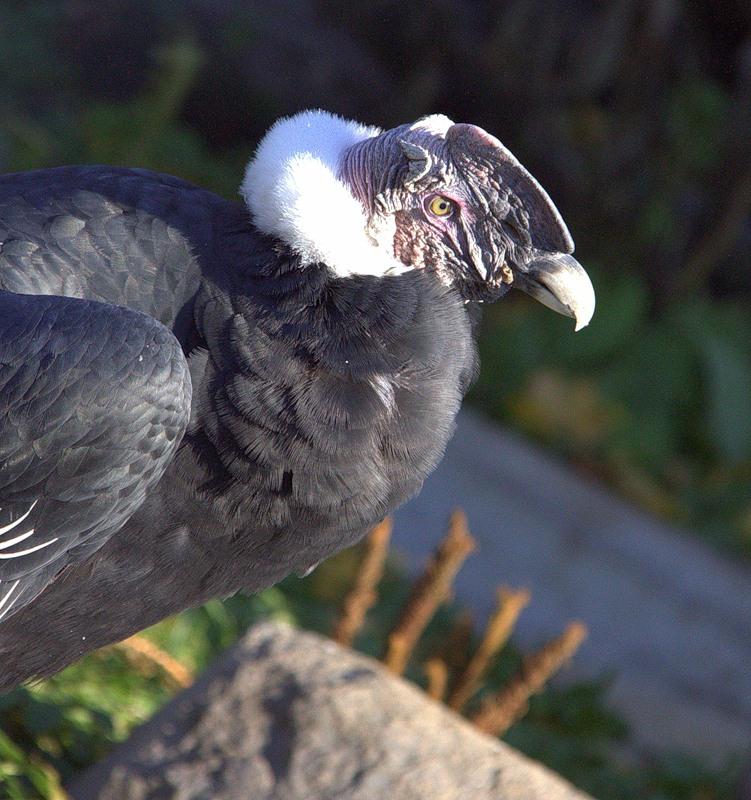Bolivia CP6/DF9GR Condor