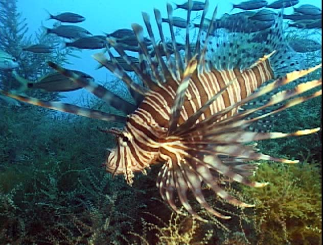 Bonaire Island DX News PJ4K Ion Fish