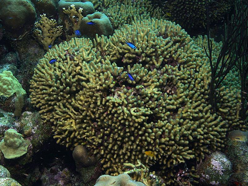 Bonaire Island Blue Reef DX News
