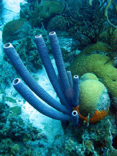 Bonaire Island DX News PJ4/PE1MAE