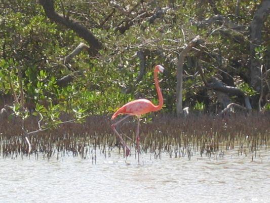 Bonaire Island PJ4/PE1MAE