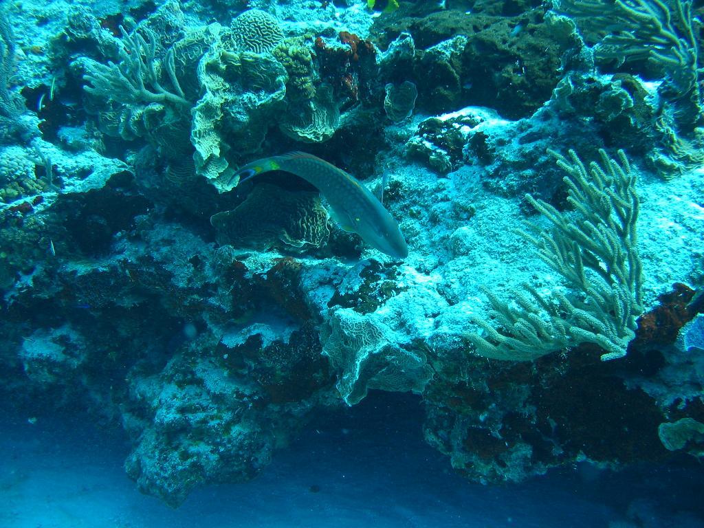 Bonaire Island PJ4D