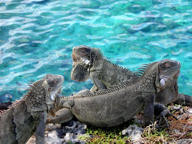 Bonaire Island PJ4HZ
