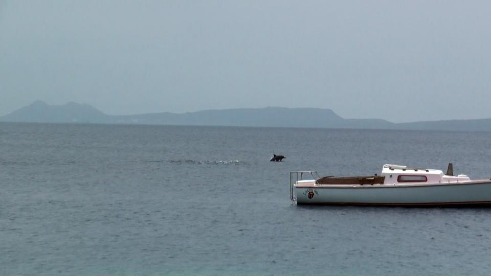 Bonaire Island PJ4N