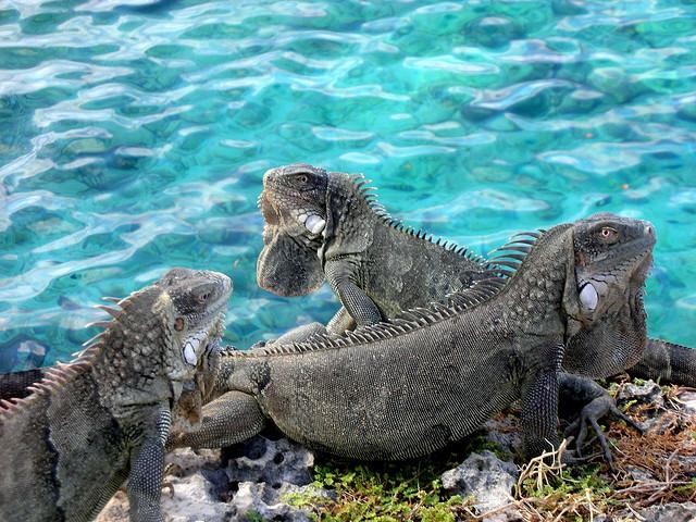Bonaire Island PJ4Q DX News