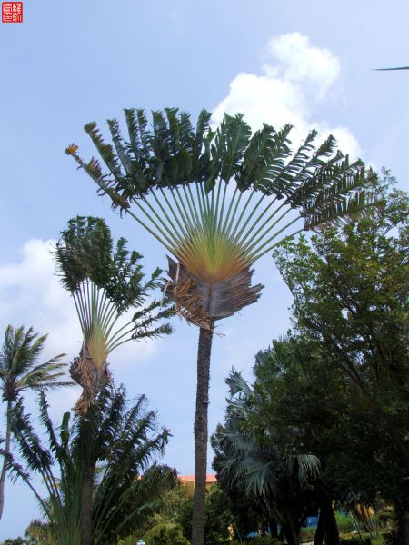 Bonaire Island PJ4/AA2WN DX News