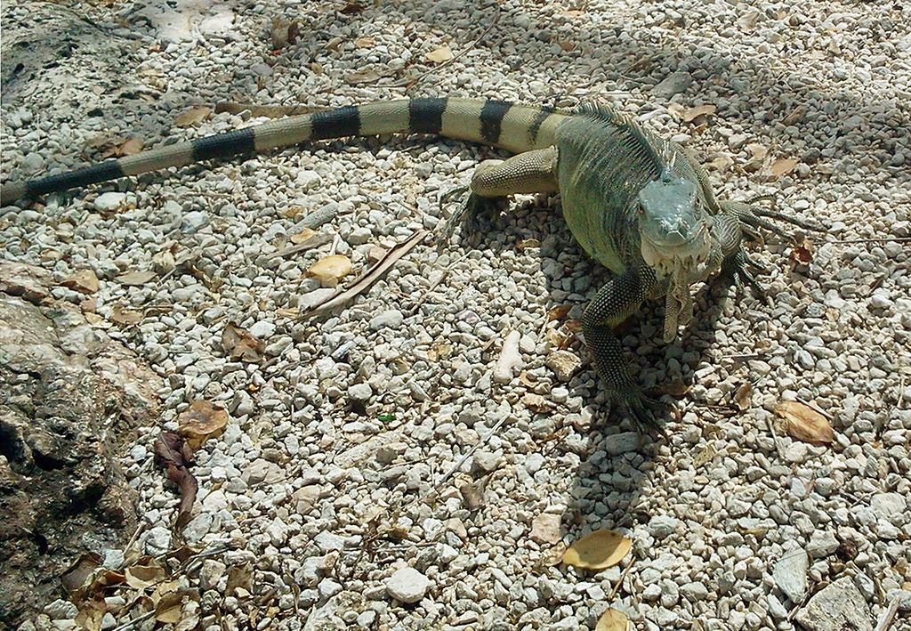 Bonaire PJ4J 2014 Tourist Attractions