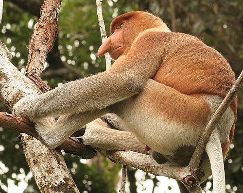 Borneo Island 9M6/UA3QNS Monkey DX News