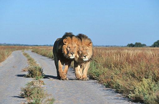Botswana A22LL DX News