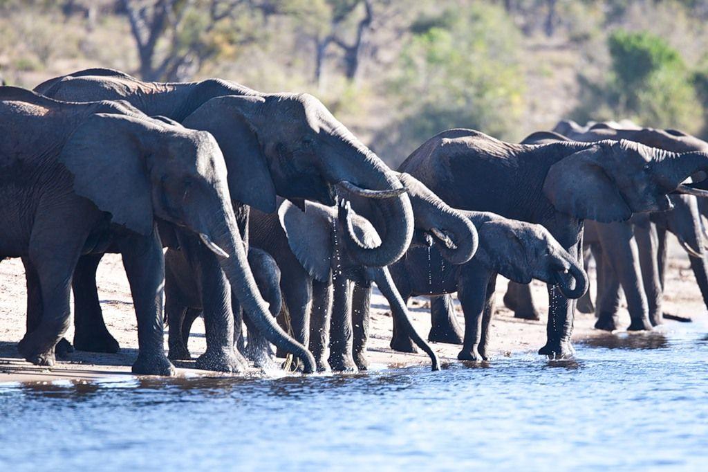 Ботсвана A25CE