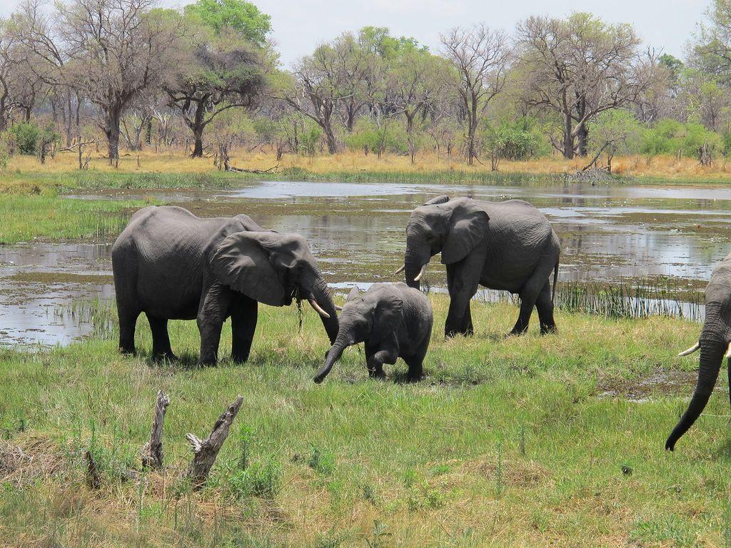 Ботсвана A25DJ DX Новости