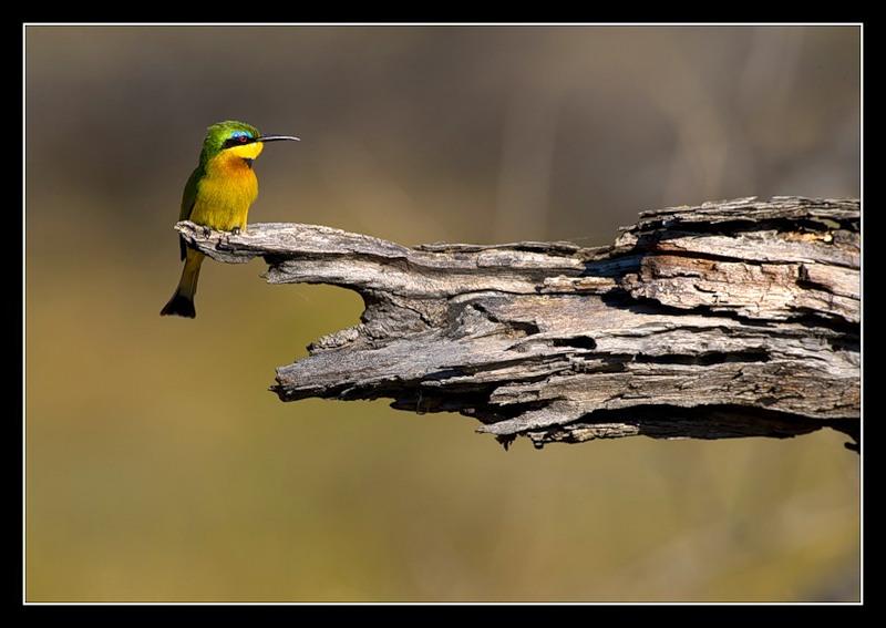 Botswana A25JB Bee Eater