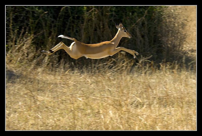 Botswana A25JB DX News Antilope
