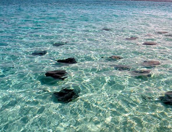 Cayman Islands ZF2LC