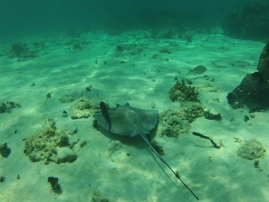 Cayman Islands ZF2MB DX News
