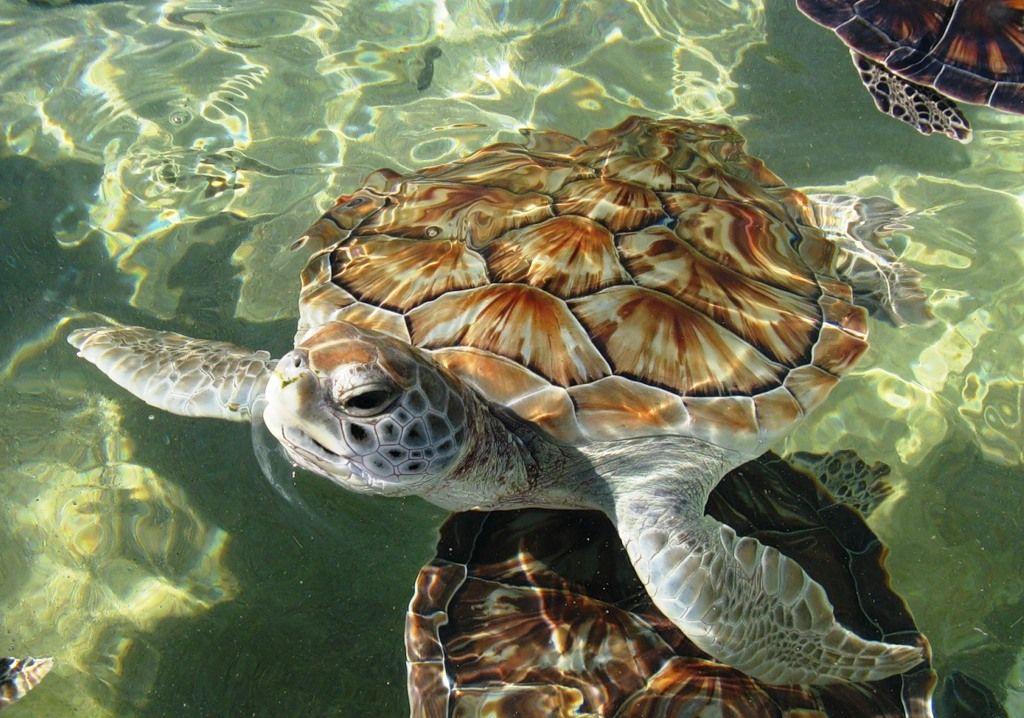 Cayman Islands ZF2DX DX News