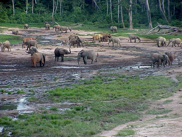 Central African Republic TL8PB