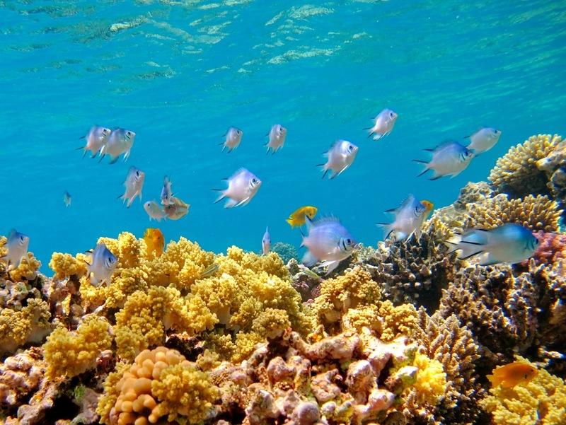 Chagos Archipelago VQ9KA DX News