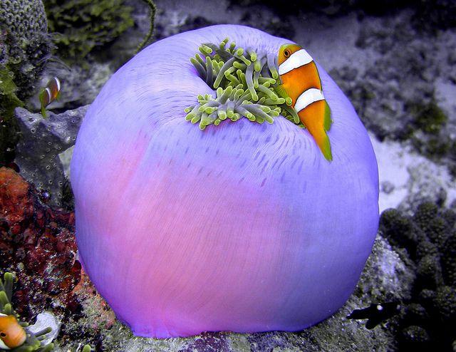 Chagos Archipelago VQ9XR