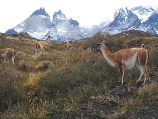 Чили CE1A