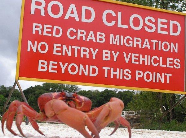 Christmas Island VK9XS 2012
