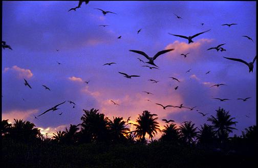 Christmas Isladn Kiritimati Island Kiribati T32JB DX News