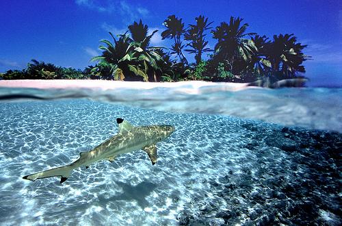 Cocos Keeling Islands VK9CM DX News
