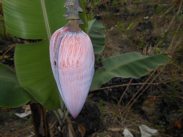 Comoro Islands D64K DX News 1 Flower
