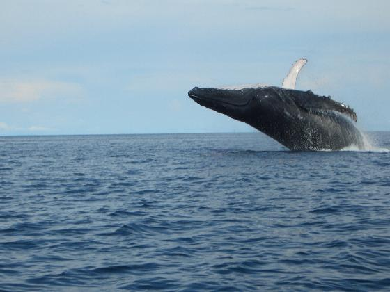 Остров Контадора Панама HP1/DL2BP HP1/DJ2ST DX Новости Кит