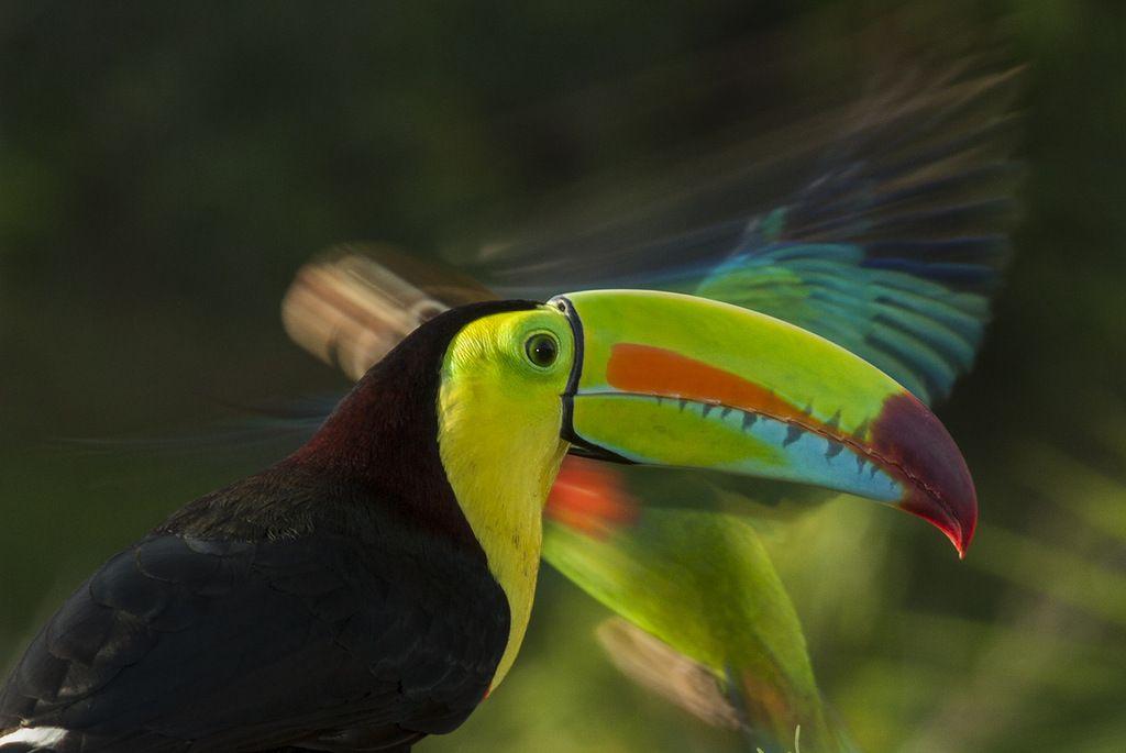 Costa Rica TI8/AA8HH