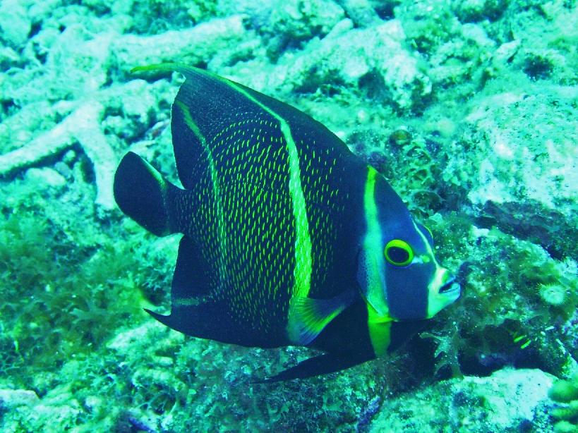 Curacao Island DX News