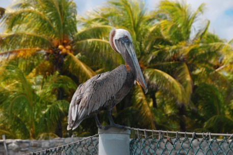 Curacao Island DX News PJ2/W9JUV