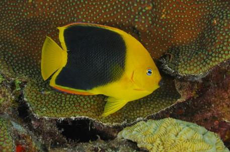 Curacao Island DX News PJ2T K6AM