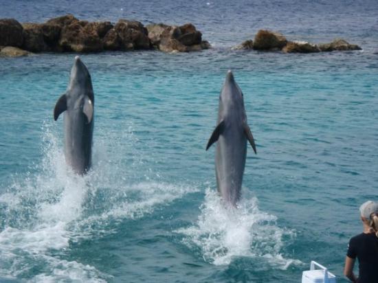 Остров Кюрасао PJ2/AA9A DX Новости Дельфины
