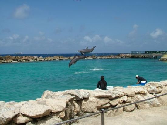 Curacao Island Dolphins PJ2/DF7ZS