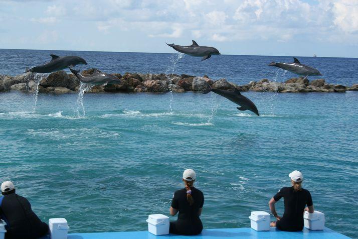Curacao Island PJ2/DK5ON DX News